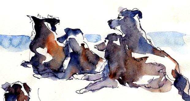 KiS-Hunde